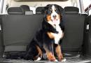 Consejos para planificar un viaje en vehículo con tu perro